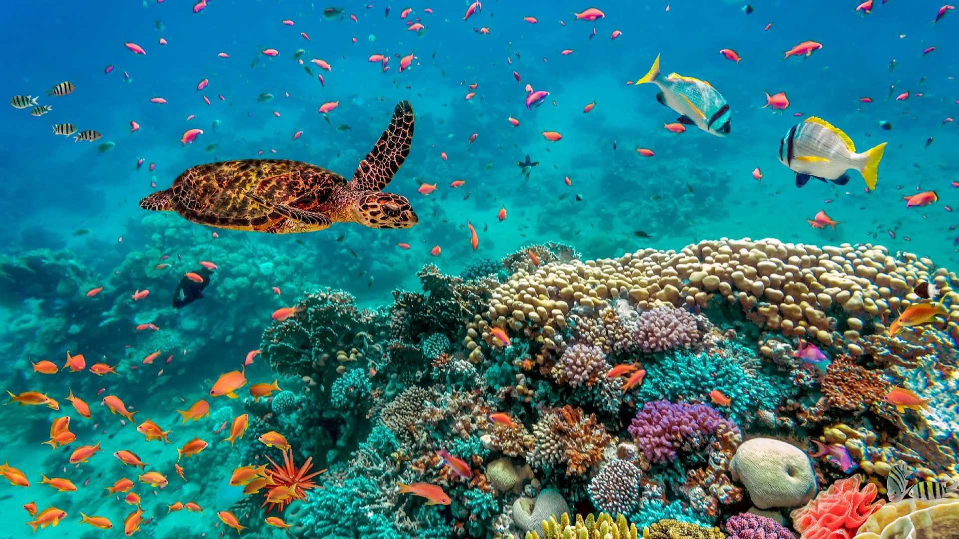 02 - LoRes - Isla Contoy Tour - Ixlaché Reef